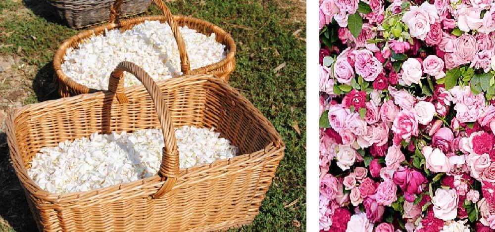 récolte-Grasse Jasmin, rose