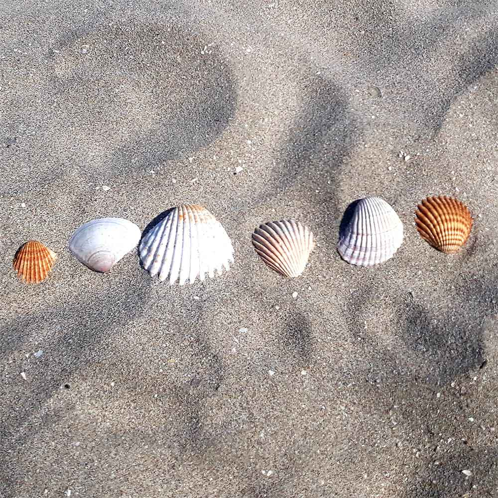 Ligne de coquillages sur le sable